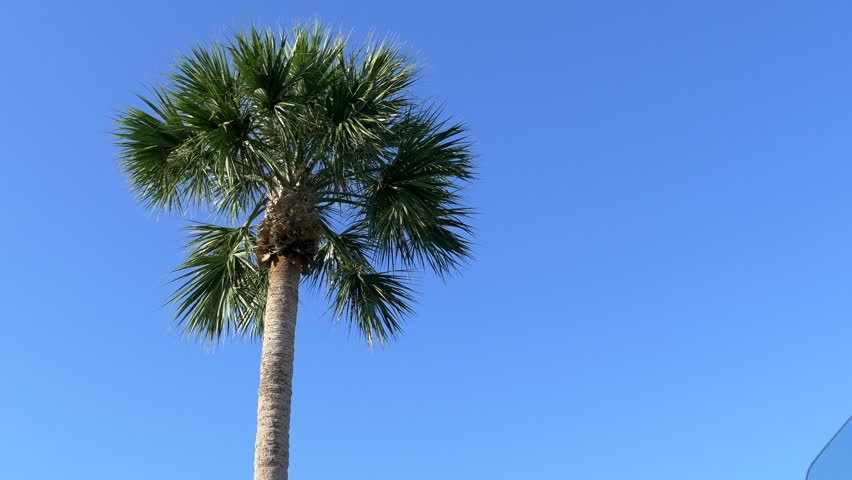 Stock Video Of Low Angle Of Florida Palm Tree 10063040 Shutterstock