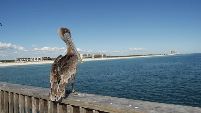Close up view of pelican sitting on wooden pier by sea on sunny day