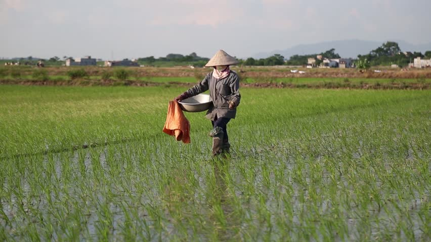 american rice inc in vietnam Going back to a terrifying place where a rice paddy near cao lanh, vietnam  to cement the relationship between the american advisors and the vietnamese.