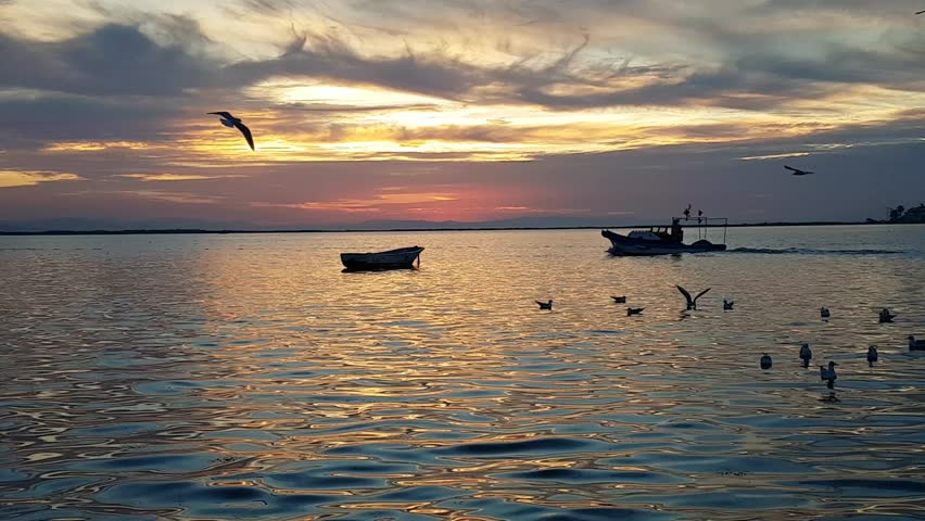 Seagulls flying and swimming on the sea at sunset in Izmir - Turkey. There is a fishing boat on the sea.