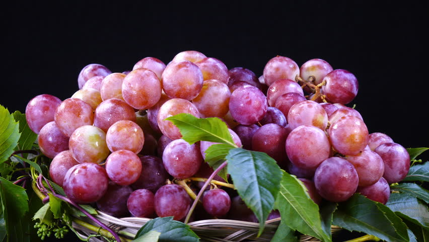 Amazing bunches of fresh pink and violet grapes, rotating on black background clockwise close up. Vibrant natural texture with excellent details in UHD 4k, 3840x2160. Eco product for healthy food.