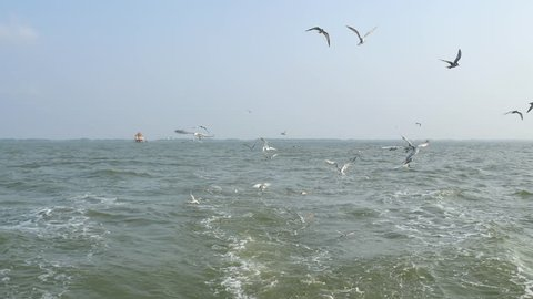 Common tern flying at the end of a fishing boat.