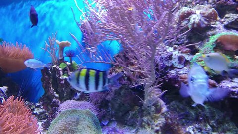 Life under water, full of colors, fishes and plants