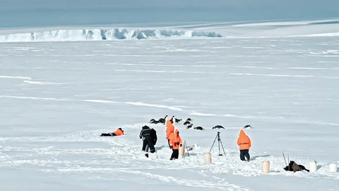 Group of cute Adelie penguins on snow field