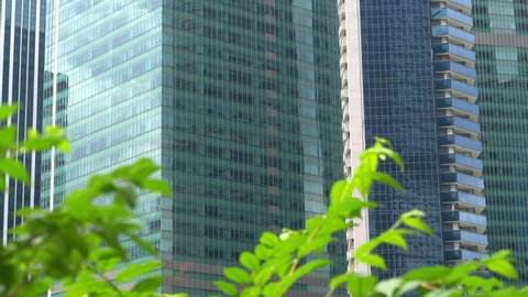 CLOSE UP: Urban glassy buildings overlook green park in downtown of metropolitan city. Upscale business district buildings soaring into the sky. Green tree leaves rustling in gentle winds on sunny day