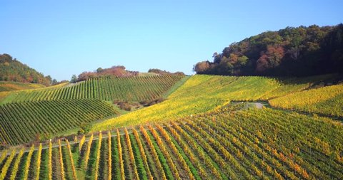 Aerial Drone Shot of wineyards in fall Seasonal with beautiful colours yellow and green