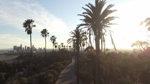 Drone view through tall palm trees to downtown Los Angeles