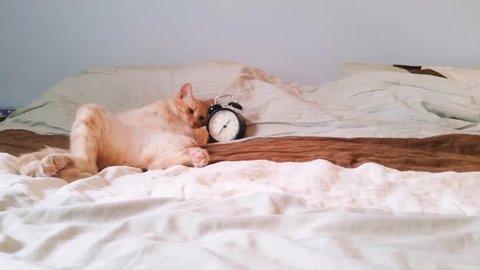 Cat turning off alarm clock