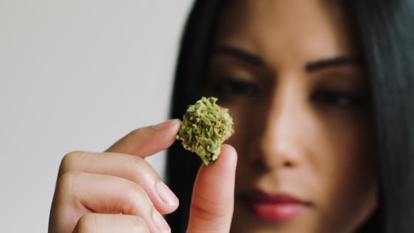 Female inspecting cannabis bud close-up | Shutterstock HD Video #1008612940