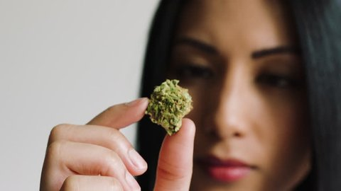 female inspecting cannabis bud close-up