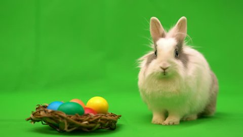 Easter bunny with Easter multicolored eggs on a green background.