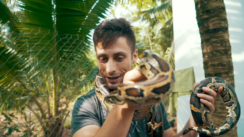 Camera slowly rotates around an attractive young male tourist holding a Burmese Python around in his hands and around his neck