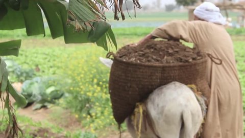 Short video of a farmer walking away beside his donkey and the back of the donkey heavy with a bag full of clay.
