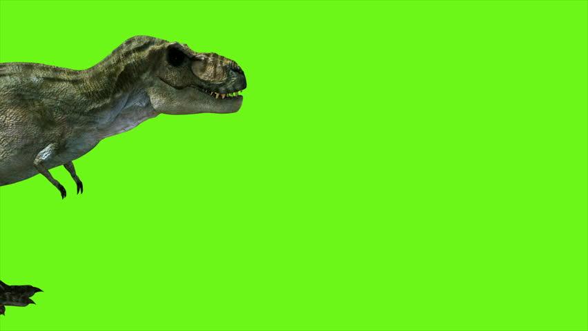 T Rex Tyrannosaur Dinosaur animation on green screen. GI realistic render. 4k.