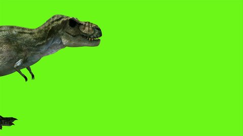 T Rex Tyrannosaur Dinosaur animation on green screen. GI realistic render. 4k.