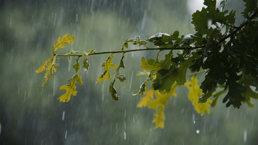 Hail And Heavy Rain Falling On Tree Leaves In Slow Motion 4k 02 | Shutterstock HD Video #1009378940