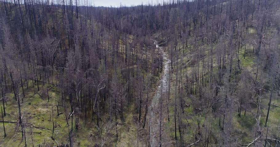 Aerial Drone View Dead Trees and river ravaged By Wildfire. Sierra Nevada ranges, California, USA