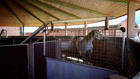 Starting an automatic mechanical horse walker. Launch of an automatic horse training machine