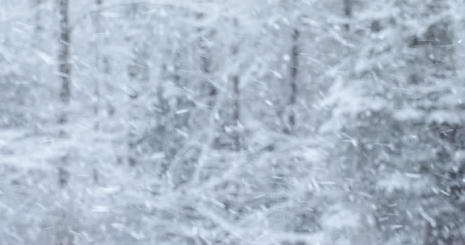 A heavy late winter snowfall in New England with a forest blurred in the background.