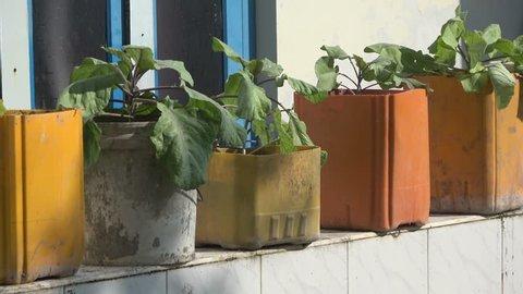 Flower garden on the cornice. Maldives video