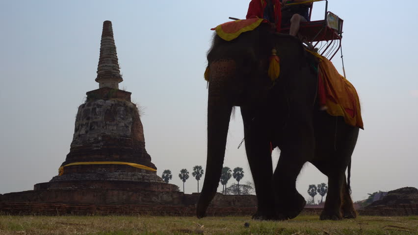 Elephant riding in Ayutthaya. The tourist rode on elephant back to see the Pra Nakorn Sri Ayutthaya historical park on February