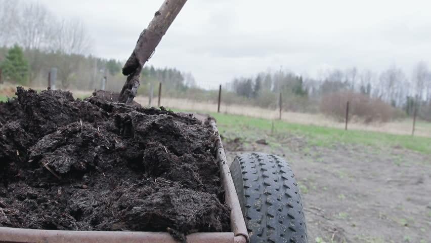 Man spreads organic fertilizer on his own farm. soil fertilizer. Close up
