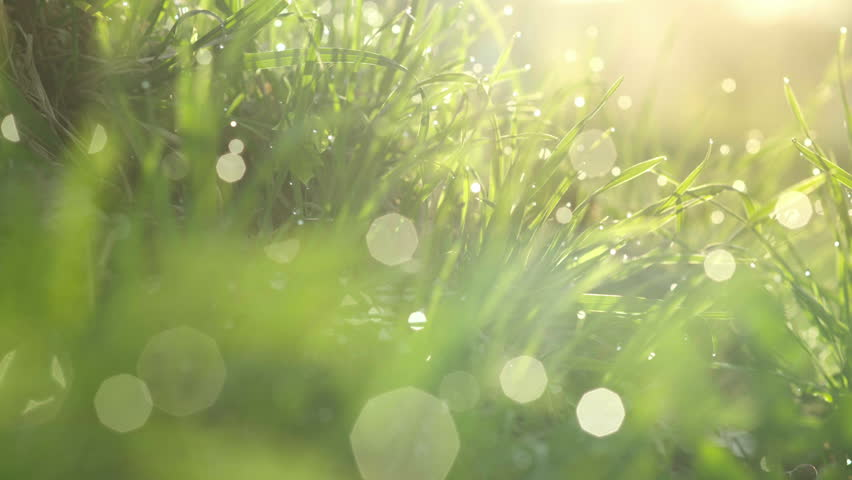Drops of water on the grass. Morning dew. Blurred Background