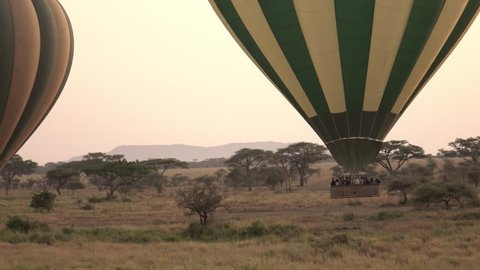 AERIAL, CLOSE UP: Pilots steering safari hot air balloons by ascending to rise above tree canopies in stunning Serengeti at rose-pink light of dawn. Tourists on journey of a lifetime in wild Africa