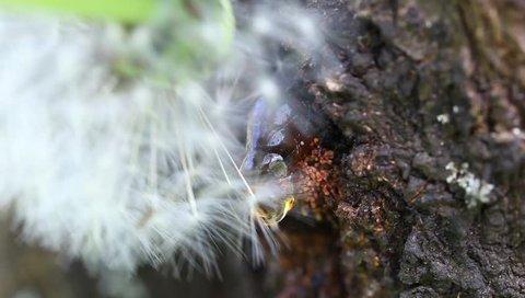 Dandelion seeds  white flower on a resin tree
