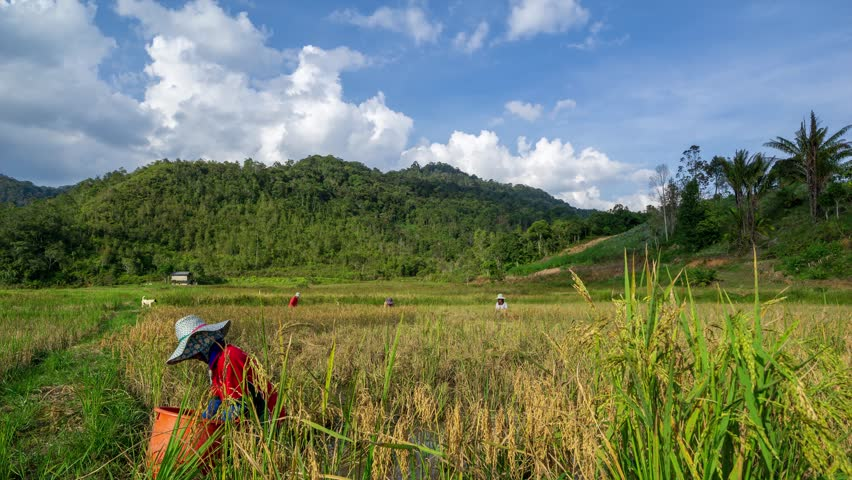 4K Time lapse of moving clouds over organic paddy fields at Bario. Bario is a community of 13 to 16 villages located on the Kelabit Highlands in Miri Division, Sarawak, Malaysia. Zoom In.