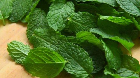 Fresh mint leaf. Rotation