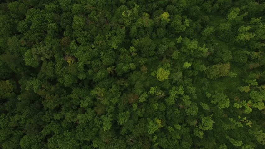 4K aerial of flying over a beautiful green forest in a rural landscape, Vermont, USA