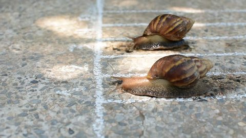 two snail run on the line on concrete ground. subject is blurred.