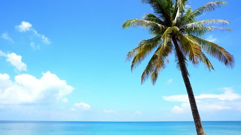 Clear blue sky with palm tree in summer season at phuket thailand