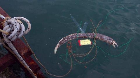 A dead moray eel lies on the surface of the sea among debris near a marina