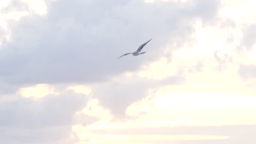 Seagull is flying in sky over the sea waters. Stock. Seagull hunts over the sea