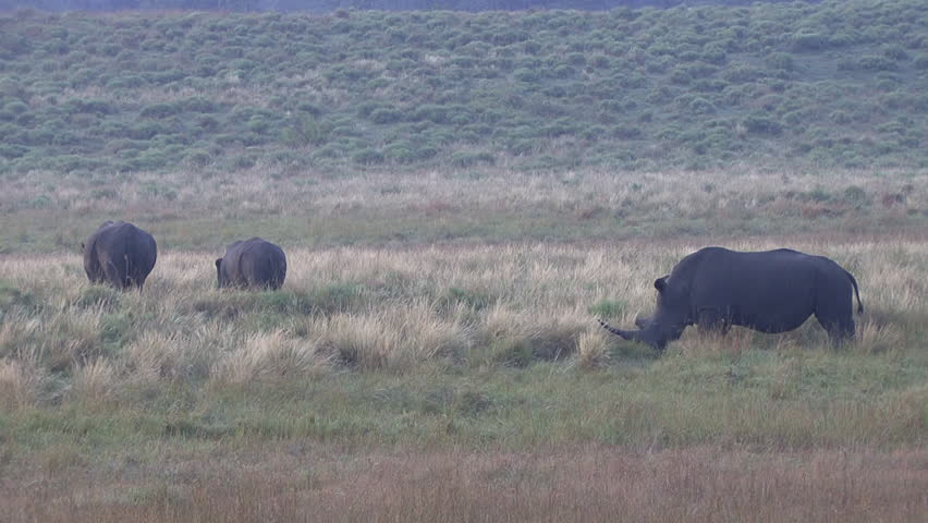 White Rhinoceros Several Dry Season in South Africa