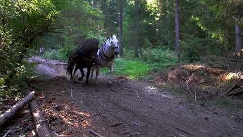 Horses pulling felled tree in forest