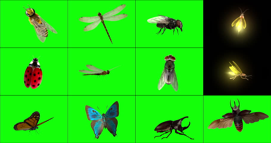 A variety (12 options) of 3D animated insects that are landed, from various angles, occasionally fluttering their wings. Key out the green background to have insects standing on your logo or titles.