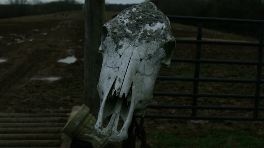 Cow Skull Mounted On Post At Creepy Farm