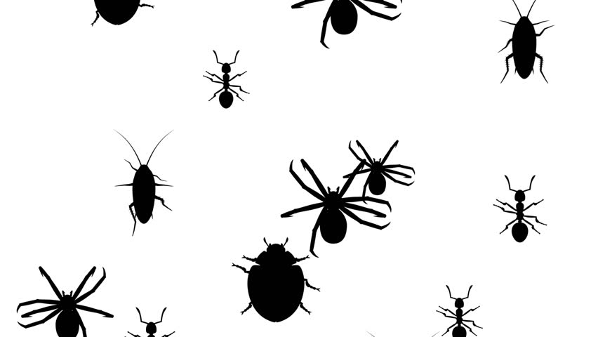 Invasion of Hordes of Arthropods  Stock Footage Video (100% Royalty-free)  1011773180 | Shutterstock