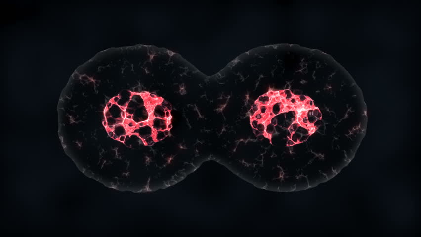 Binary fission cells division motion graphic  | Shutterstock HD Video #1011910550
