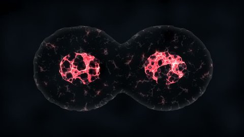 Binary fission cells division motion graphic