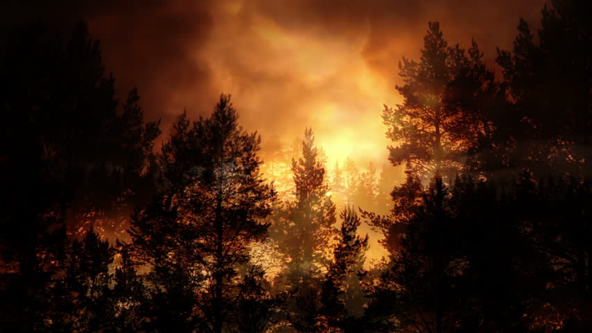 Forest and evening light background animation   Shutterstock HD Video #1012153340