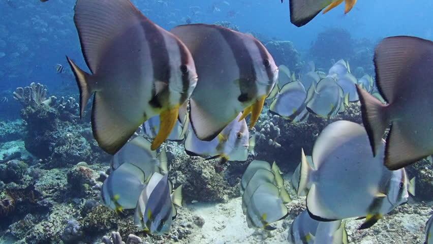 Beautiful Underwater World At Sipadan Stock Footage Video 100