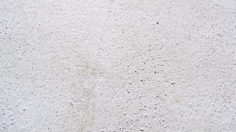The background is concrete white in nature. Texture