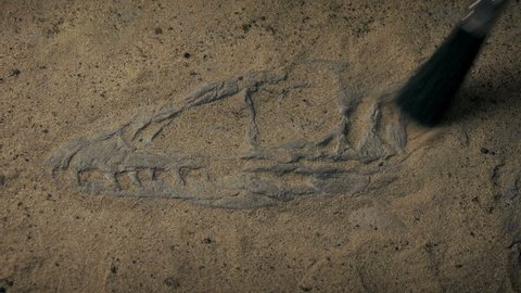 Jurassic Raptor Fossil Skeleton Being Excavated In Desert
