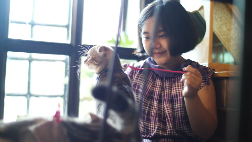 4K Lovely Asian girl feeding group of kitten cat with cat food, friend and family | Shutterstock HD Video #1012307270