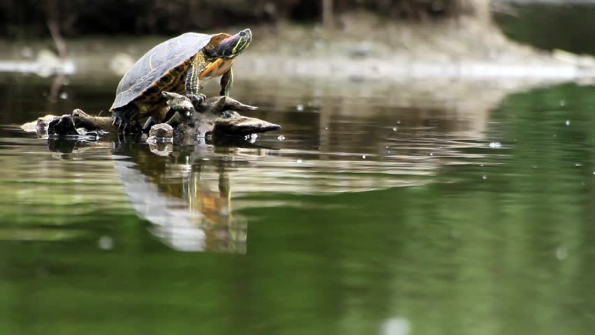 turtle and water