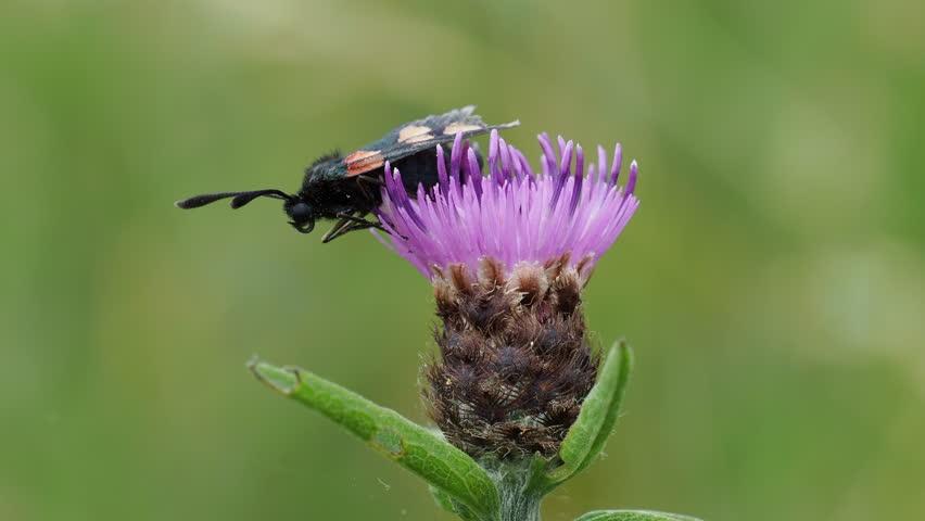 Header of knapweed